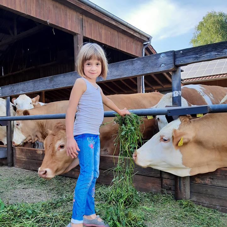 Kind Bauernhof Kühe